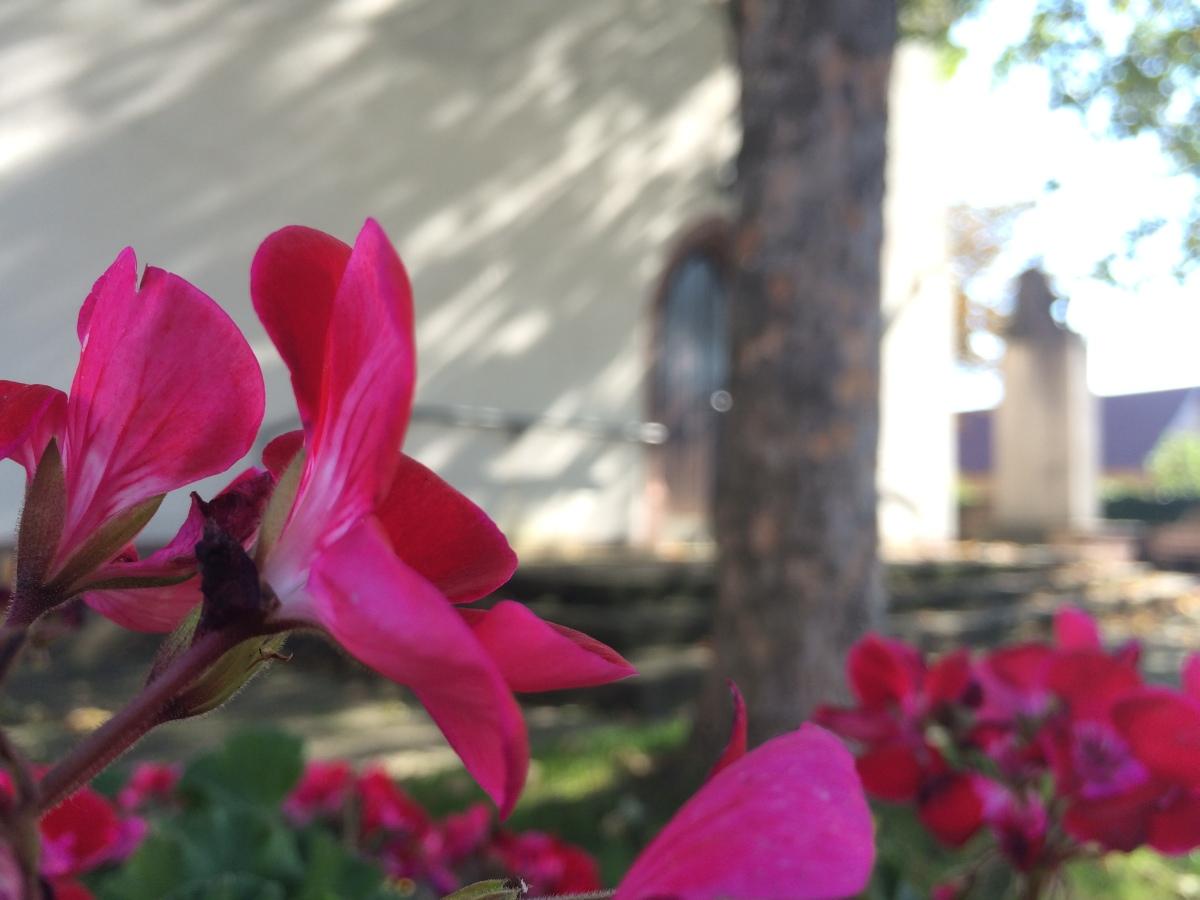 Kirche Weisweil mit Blume